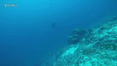 巴厘岛Mola Mola 翻车鱼 太阳鱼_Blue Season Bali