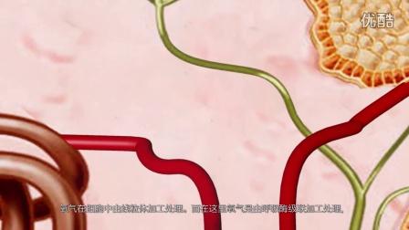 BTL_6000_HIL_visu_anti-inflamatory