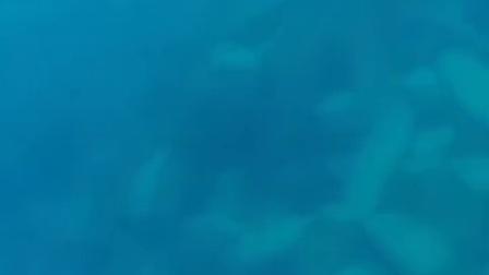 #猎潜#潜水射鱼#射牛港#GT#泰德猎潜