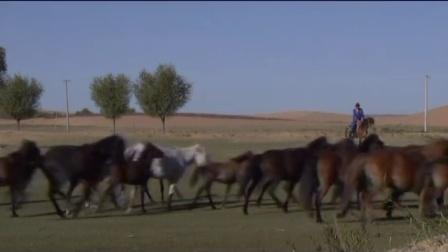 乌审电视台2016年5月26日蒙语专题《绿洲》