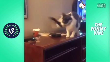 Funny Cats Compilation 2016 - Best Funny Cat Videos Ever __ Funny Vines