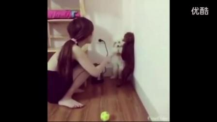 实拍:女主人在惩罚犯错的狗狗 但接下来发生的一幕 笑抽了...