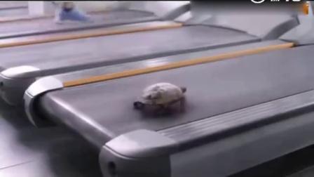乌龟逆天了乌龟要不是我背上背着个壳我能飞起来