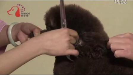 宠物美容师资格证
