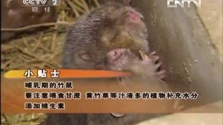 生财有道:竹鼠养殖大户唐文荣作客央视(下)