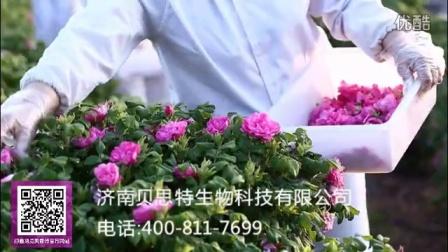 头期玫瑰花冠茶