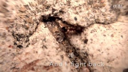 A FAT ANT TRIP (胖蚁之旅)