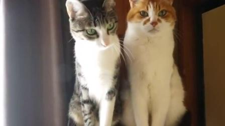 只要1支逗貓棒 輕鬆分辨老貓與小貓