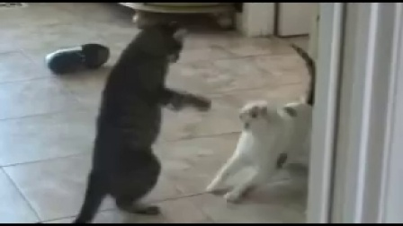 Extreme Cat Fight, Caught on Tape!