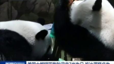 美国大熊猫双胞胎迎来3岁生日 吃冰蛋糕庆生 160718 新闻空间站