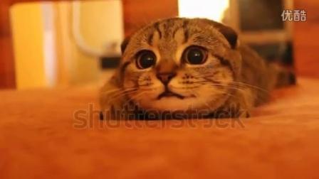 好奇心严重的小猫