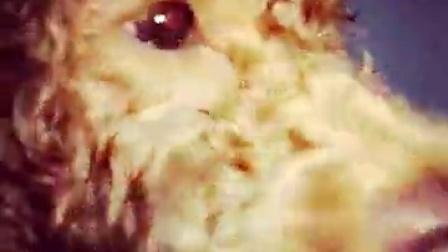 @柠檬味的冰淇淋 @原谅我不能原谅你 @女侠风 @叮当猫的百宝袋℡ @橙子比柠檬更萌 @Aikes