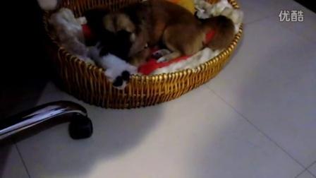 20160418布丁狗和小奶猫睡觉