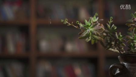 《绽放5毫米》A6300拍冬天开花的多肉植物
