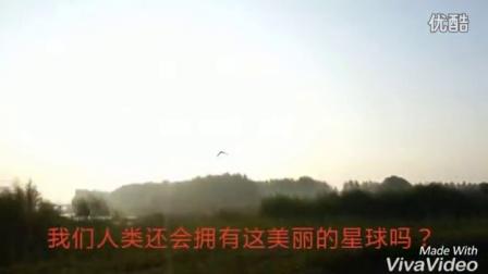 全国首部保护野生动物【音乐视频】放生国家二级保护动物池鹭