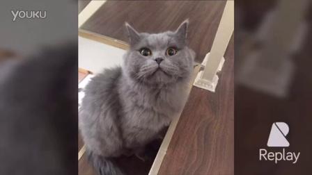 搞笑猫咪图片视频