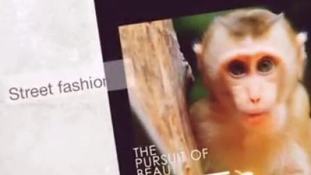在什么地方可以买到小猴子宠物猴袖珍石猴