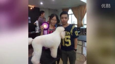 广州布朗熊宠物美容培训学校 优秀学员