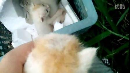 昨天晚上下雨听见外面有叫声 连忙去看 结果四只刚出生的小猫在雨中找妈妈 看着实在可怜 简单的弄了一个