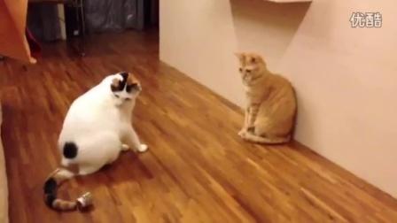 兩隻貓互踢罐子