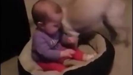 【发现最热视频】宝宝霸占了狗窝 狗狗不能忍了!