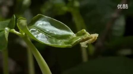 植物生长生命力的顽强