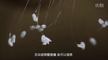 传说中的優曇婆羅花是草蛉虫卵吗