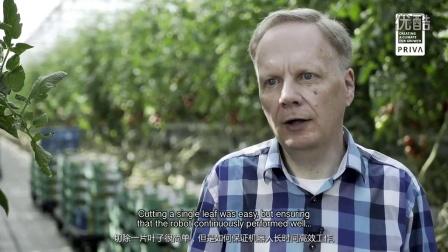 Priva Kompano 番茄除叶机器人 - 中文字幕