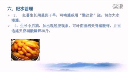 餐饮_生活_厨房生活_红薯万斤栽培技术_标清