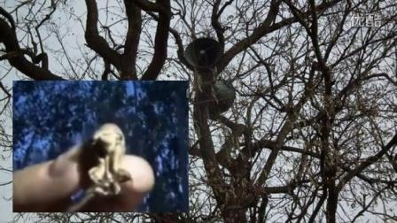 俺村村长逮个蝶拉猴都在大喇叭来安排,喜毁了,徐州淮北萧县的看