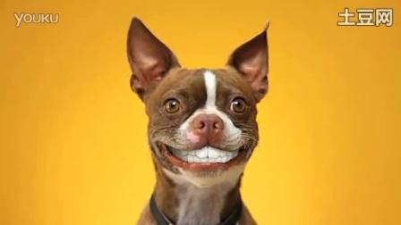 美国超可爱搞笑宠物狗食品广告之微笑篇