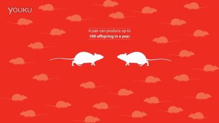 能多洁虫害知识短片_Facts About Rats老鼠知识短片