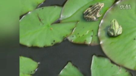 方正湖青蛙王子与莲花公主-一人哥