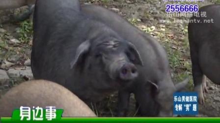 马边深山养野猪