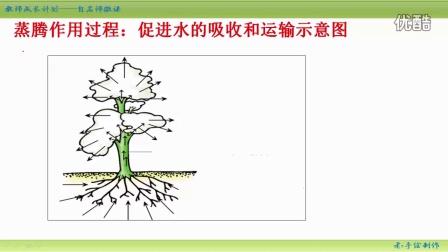 【生物大师】初中生物微课教学视频第38集:蒸腾作用