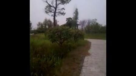 江南公园中奇特一景