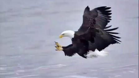 鹰的图片编辑