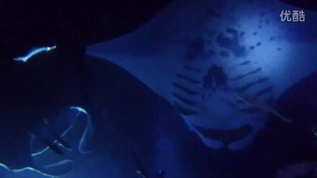 夏威夷大岛夜潜看Manta Ray