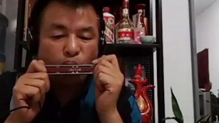 青藏高原 口琴演奏