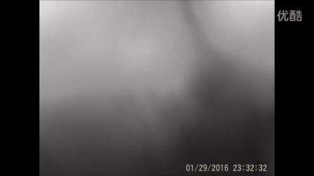 四川新龙的高山精灵:兔狲和雪豹一家