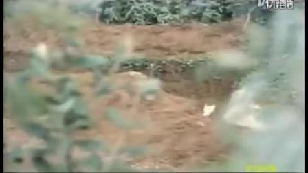 中越自卫反击战《雷场想思树》清晰完整版_标清