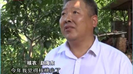 文玩核桃调查:文玩核桃主产地四座楼核桃遭遇减产  北京您早 160921