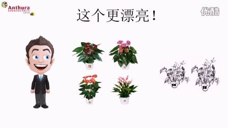 为什么购买正品安祖花?