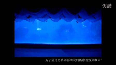 白鲸海之恋—天津海昌极地海洋公园