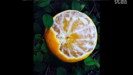 新鲜水果爱媛38号橙 好吃得暴 诚招合作伙伴