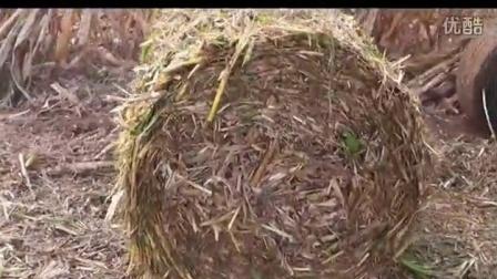 站立干玉米秸秆粉碎打捆机图片视频