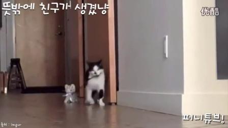 搞笑动物篇萌萌的猫星人_标清