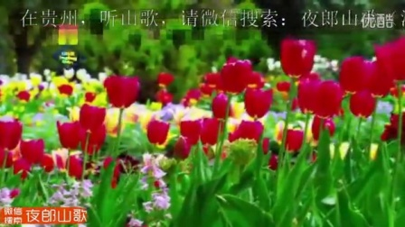 贵州夜郎山歌-隔河看到菜籽青-六曲山歌