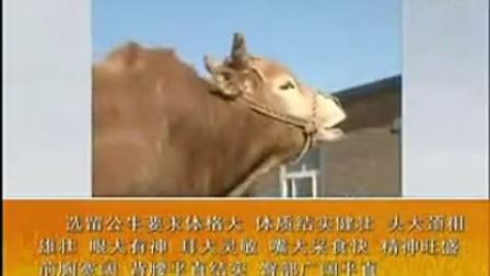 致富经养牛视频全集-农广天地BJ6D0