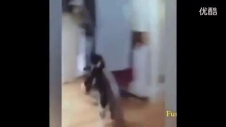 各种动物的搞笑视频合集 搞笑视频美女